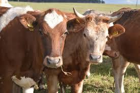 Рабочий животноводство Польша