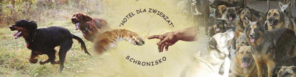 Гостиница для животных Польша
