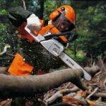 работники для для работы в лесу Польша