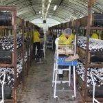 Работа в грибной ферме Польша